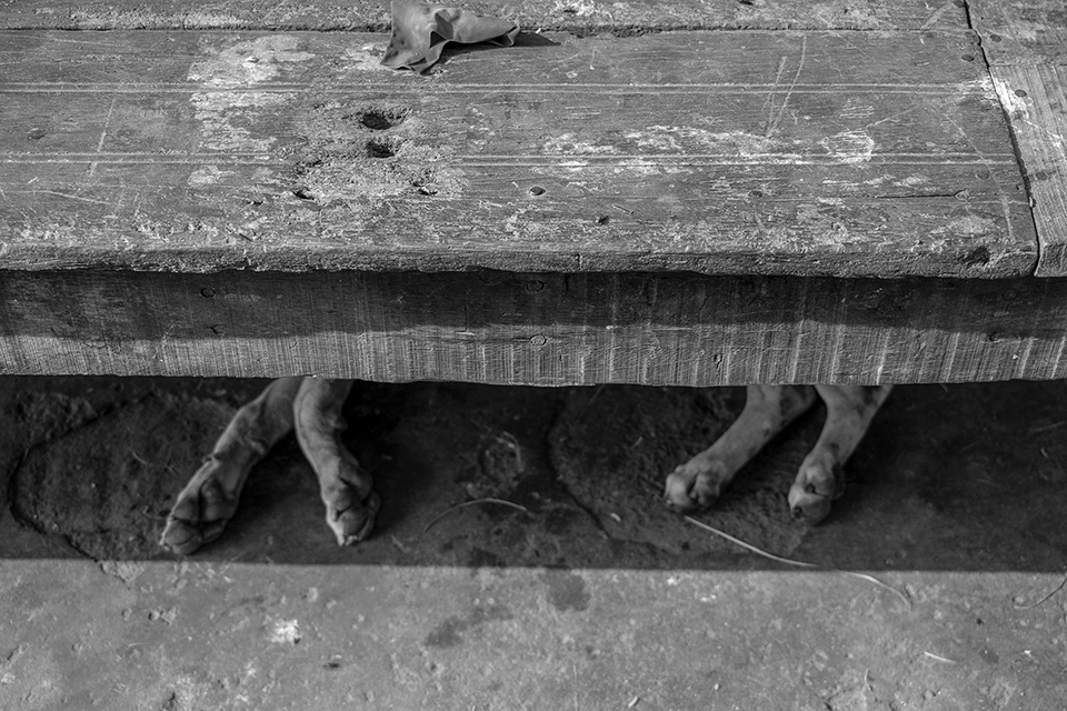 Photos has been taken when a street dog lay down under a bedstead.