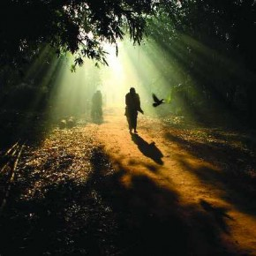 The overhanging foliage and the shadows on the ground form a natural frame around the passers-by in the photograph. Photograph/Ayan Sinha
