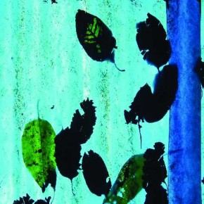 The contrasts do not end with light and shade. There are blurred and sharp areas. There are fresh and decayed, perfectly formed and fragmented leaves. Photograph/K Madhavan Pillai