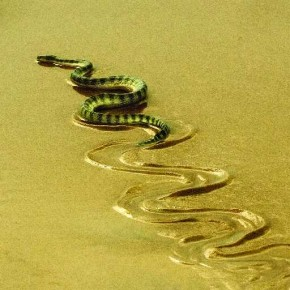 Creatures like snakes leave interesting patterns on the ground. You need to be quick at getting your composition right before the pattern disappears. Photograph/Jetty Yogindranath