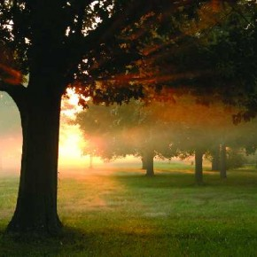 Sunlight pouring through leaves of the tree sets the perfect mood for this magical composition. Photograph/Diane Miller