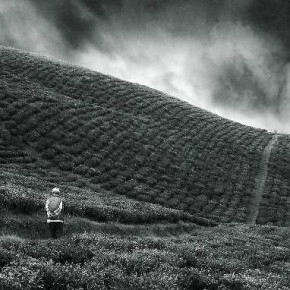 The diagonal lines of the slope, the straight line of the narrow pathway and the direction in which the man is walking, help draw the viewer in. Photograph/Biplab Sikdar