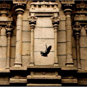 The pigeon captured in mid-flight framed by the ornate wall of a monument creates a point of interest in an otherwise oft-explored composition. Photograph/Arun Kumar E V