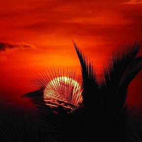 The image conveys a sense of tranquility as the setting sun enmeshes itself in a few silhouetted ferns, dimming an orange sky with soft clouds. Photograph/Surabhi Nadig