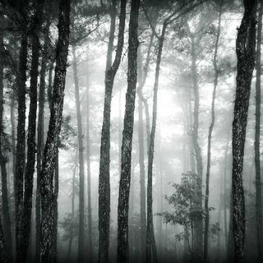 "Title: Mysterious Forest, ""This picture is taken in Shillong peak's adjacent woods. The combination of mist and the wood forced me to capture the frame."" Camera: Canon EOS 350D ISO: 200 Aperture: f/4.5 Shutterspeed: 1/125sec. Photograph/Debapriya Basak, Malda"