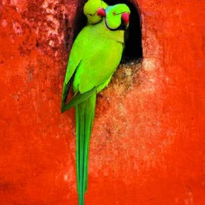 Birds tend to fly away if you go near them. So do not let them be conscious of your presence. Photograph/Birds tend to fly away if you go near them. So do not let them be conscious of your presence. Photograph/Anirban Brahma