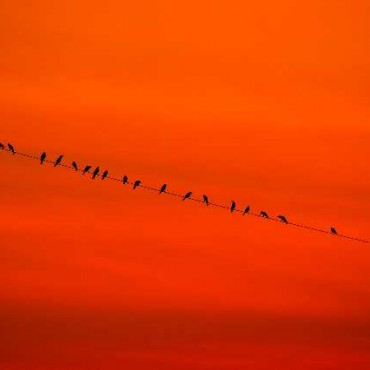The wonderful orange sky acts as negative space and surrounds the flock of birds perched on a wire, effectively conveying a sense of scale and magnitude. Photograph/Sindhur Reddy
