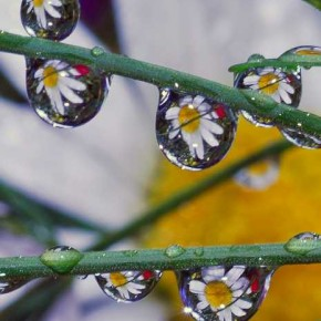 This image, Drops of Daisies, was an outdoor shot that I took right after a rain storm. It was still overcast so I used a flash for the drop. Exposure: 1/60sec at f/18 (ISO 200). Photograph/Steve Wall