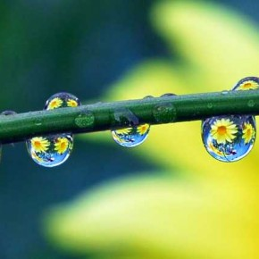 I set up this shot by moving two flower pots behind the plant, till I could see the flowers refracted in the drops. Exposure: 1/30sec at f/9 (ISO 100). Photograph/Steve Wall