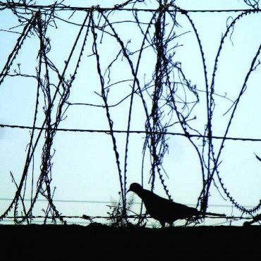 "Title: Freedom Is Absolute, ""I was looking to capture a silhouette of the fence when a pigeon came along and gave the frame a new meaning. It felt as if no fence could come between him and his freedom—freedom is absolute and for all pure souls."" Photograph/Akhillesh Singh, Dehradun"