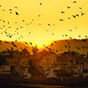 Even a simple scene of birds flying in the sky looks pleasing due to the orange sky and the distant sunset. Photograph/Manikandan Venkatesan