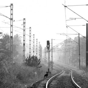 "Title: Dog on the Tracks ""Empty and deserted tracks always evoke a sense of loneliness in me. I fi rst noticed this track during noon and thought that it would make a great picture in the morning mist."" Camera: Canon PowerShot SX10 IS ISO: 200 Aperture: f/5 Shutterspeed: 1/15sec Photograph/Gichu Tom, Kerala"
