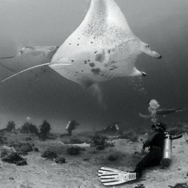 Manta Ray: Magical manta Rays are graceful giants of the sea, and swimming with them is a lesson in humility. These mantas enjoyed feeling the tickle of the escaping bubbles upon their bellies. Photograph/Umeed Mistry