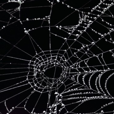 Shooting against the light helps highlight water droplets clinging on to the spider web, a common occurrence seen in the monsoon. Photograph/Anupam Pal