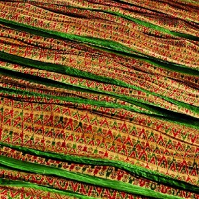 I shot this image at a saree mill in Jaipur. I loved the loud colours of the cotton saree, and I made this image because of the fascinating patterns. Photograph/Palak Chauhan, Student, Vadodara, Gujarat