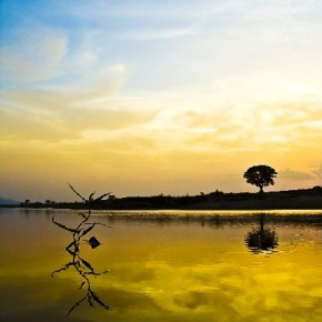 "Title: Patterns in Nature ""I shot this at the Tel river in Kesinga, Orissa, right after sunset. I went into the water to capture a perspective of the plant in the foreground combined with the tree and sky in the background."" Camera: Canon EOS 350D Lens: Canon 18–55mm Aperture: f/6.3 Shutterspeed: 1/100sec ISO: 200 Photograph/ Rohan Sachdeva, Orissa"