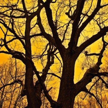 Different times of the day will give you differently toned skies. This tree is framed by a warm, yellow, evening sky.. Photograph/Jeff Hire