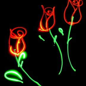 Different coloured light sources can be used the same way as paints. Roses can be painted red and the stems, green. Exposure: 27.3sec at f/7.1 (ISO 100). Photography: Stuart Nafey • Light painting: Lori Stotko