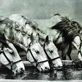 This picture of horses drinking from a water tank was taken during the hot summer of 1935 at the Danapur Cantonment, Bihar. Photograph/ Manoranjan Ghosh