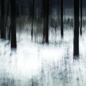 In this low saturated image, the camera movement was used to accentuate the vertical geometry of the trees. Exposure: 1/4sec at f/5.6 (ISO 100). Photograph/Chris Friel