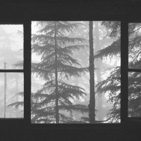 """The extreme mist of a winter morning made this scene nearly black and white. With absolutely no colour in the scene, the image had a sense of mood and drama that I tried to photograph. The window frames helped me frame the trees perfectly."" Photograph/Manoj Kumar"