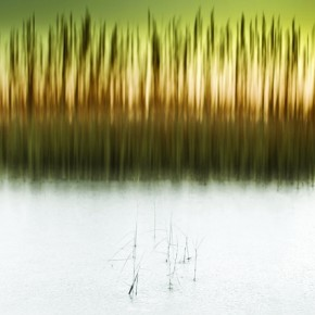 This was taken on a nearby river, which had frozen overnight. The camera movement was to accentuate the vertical reed patterns. Exposure: 1/25sec at f/3.5 (ISO 100). Photograph/Chris Friel