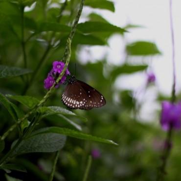 Photograph/Supriya Joshi