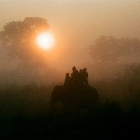 Photograph/Nagasrinivasu G