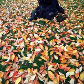 The muted greens of the grass contrast beautifully with the deep oranges and pale yellows of the fallen leaves. Photograph/Ayon Mandal