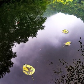 Combine reflections of a monsoon scene in a puddle with floating leaves to get a unique composition. Photograph/Sankar Sridhar