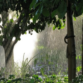 Sunlight helps make raindrops prominent. Capture rays of sunlight along with the falling rain to add a paintinglike effect. Exposure: 1/80sec at f/5.6 (ISO 80). Photograph/Eryk Klucinski