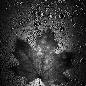 The optical properties of water allow me to play with reflections to create a surreal effect. Photograph/Brian Oglesbee