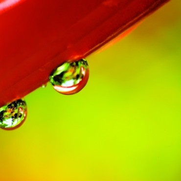 Dewdrops are one of my favourite subjects, as they make simple yet powerful pictures. In this image, the reflection in one droplet is sharp but in the other one it is blurred. This makes the picture more interesting for me. Photograph/Rajshekhar Rao