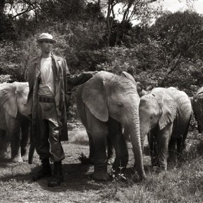 All elephants at the sanctuary have a keeper assigned to them, who takes care of the herd. Photograph/ Joachim Schmeisser