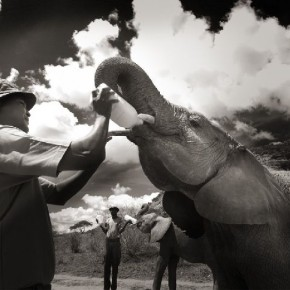 Each elephant consumes gallons of milk everyday, which they drink several times during the day. Photograph/ Joachim Schmeisser