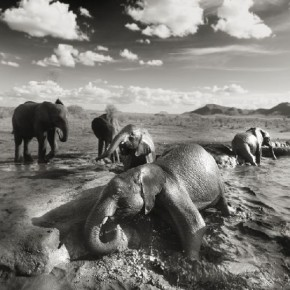 Elephants in the wild are protective of their herd, but the ones in this sanctuary are used to human presence, and let me shoot from up close. Photograph/ Joachim Schmeisser