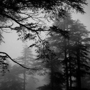 """""""I shot this image on my way to Patnitop, Jammu and Kashmir. While climbing along the mountainside, I felt like I had driven into the clouds. I watched distant objects and trees being engulfed by the fog giving the scene a dream-like look."""" Photograph/Saptarshi Chatterjee"""