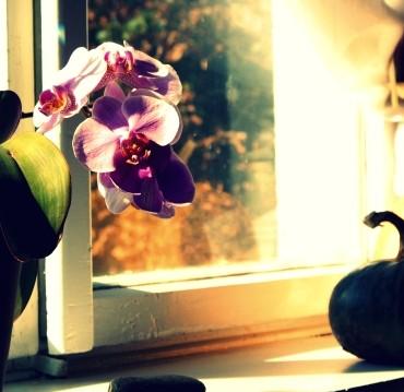 Use window light to illuminate your subjects. Photograph/Grażyna Suchecka