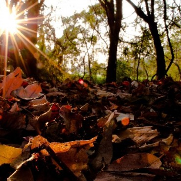 """""""I was shooting close-ups of dried leaves at Powai Lake, Mumbai. When I looked up, I saw the sun flaring nicely through the trees. This created a stark contrast, which made the photo for me."""" Photograph/Anirban Ghatak"""