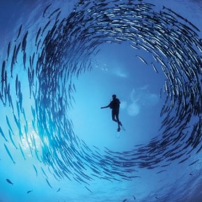 Circling Barracuda school, Papua New Guinea: David is masterful at capturing moments like these in the dynamic seas where activity changes every minute. Photograph/David Doubilet