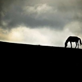 The sombre mood of this barren landscape is enhanced by the use of deliberate underexposure. Photograph/Aditya Anupkumar