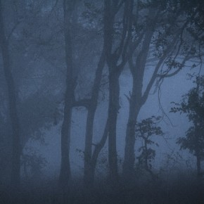 """""""During an early morning safari at Kanha National Park, I found the fog and mist adding to the mystery of the forest. I made this image in order to depict the magical feel of Kanha in winters. Experimenting with the White Balance setting gave me bluish hues in the image."""" Photograph/Mohit Verma"""