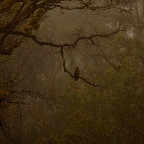 """""""The mystique of the woods, the lone crested serpent eagle and a few subdued shades drew my attention to this frame. I broke the rules of bird photography, and instead of going closer to the bird, I decided to capture the mood of the morning with the eagle in the frame."""" Photograph/Shantanu Prasad"""