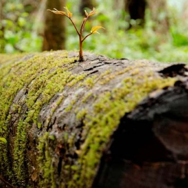 This view of tiny new saplings growing from the bark of the dead tree gives it an interesting narrative. Photograph/Vandana Naik
