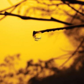 Experiment with the different colour settings of your camera to change the mood a photograph evokes. For instance, the yellow tint in this photograph makes it look warmer. Photograph/Rajesh Kunnath