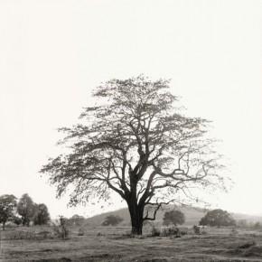 Tree behind Nandigaddi. Two monks playing carrom on a Monday. Photograph/Nicholas Vreeland/ Tasveer Arts