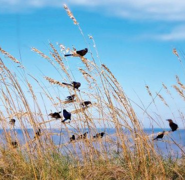 Birds often flock to beaches and other shorelines. You can make dramatic pictures of them as they fly in search of food. Photograph/Roger Kirby.