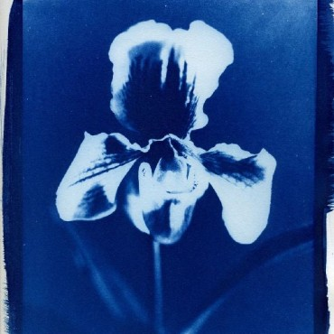 Use flowers that are vividly patterned, as these will form different tones on the cyanotype. Photograph/Charles Guerin