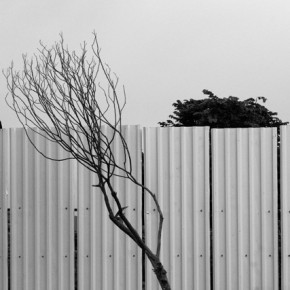 His use of juxtaposition and irony enhance his compositions and make them extraordinary. Photograph/Prahsant Godbole