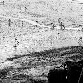All of Prashant's images are horizontal as he believes that is how we see the world. Photograph/Prashant Godbole